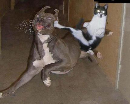 Chuck Norris\\\'s katt