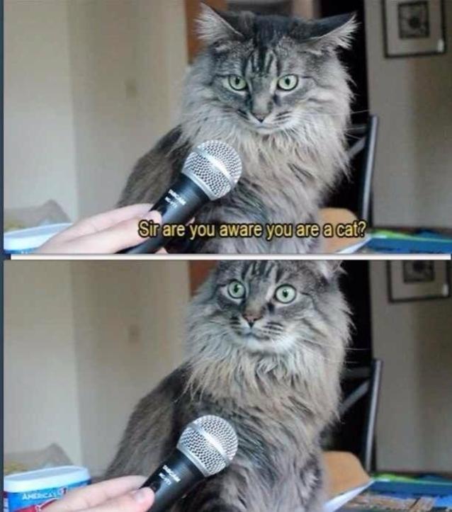 Dagens WTF från en katt