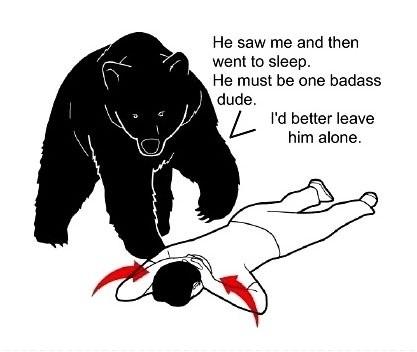 Hur björnar tänker