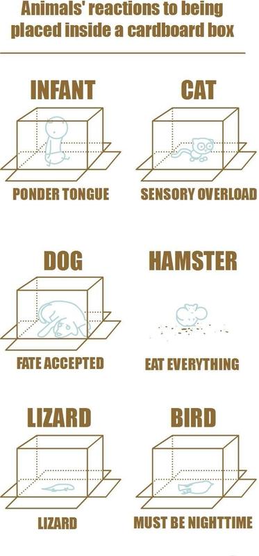 Hur olika djur reagerar om man placerar dem i en låda