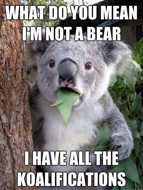 Im not a bear?!