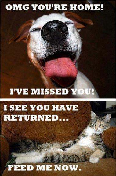 Katter > Hundar