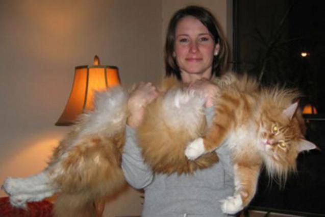 Katternas katt? Eller en tiger?