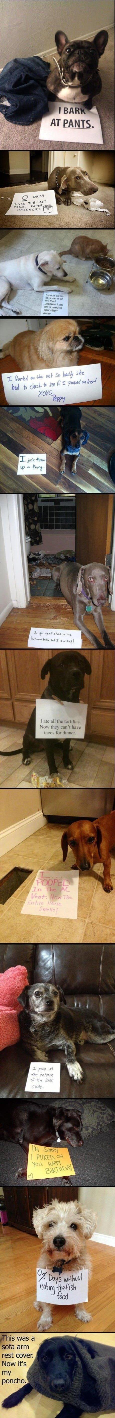 Ledsna hundar