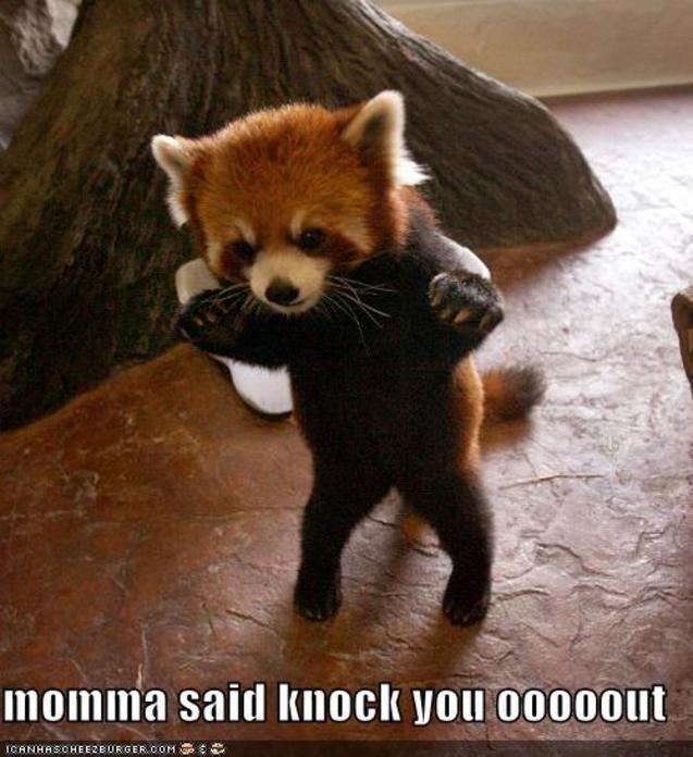 Momma said knock you ooooout!