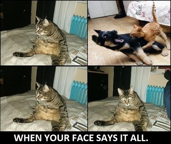 När ditt ansikte säger allt