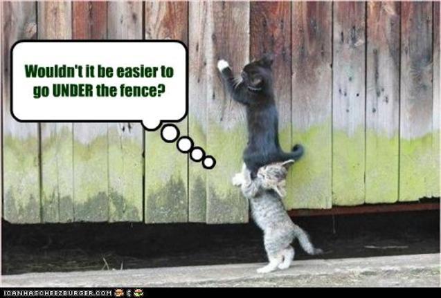 Roliga katter och staket
