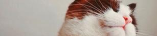 Dagens katt