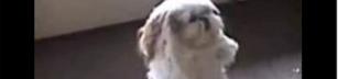 Danshund