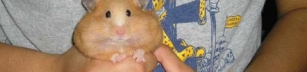 Hamstern i Hamsterpaj