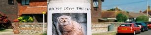 Har du sett den här katten?