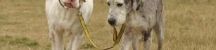 Hunden - hundens bästa vän