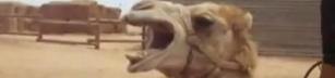 Kamel sjunger Death Metal