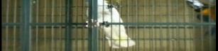 Papegojor kan göra mer än att bara prata.