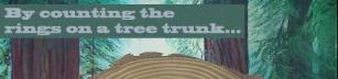 Träd och dess ringar