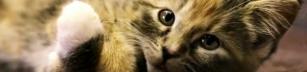 Vad katter vill ha