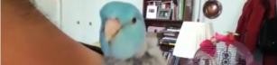 Världens coolaste fågel